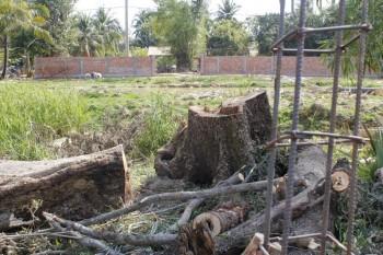 Unser Grundstück und Baumstämme