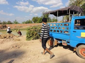 Lieferung von Sträuchern und Bäumen