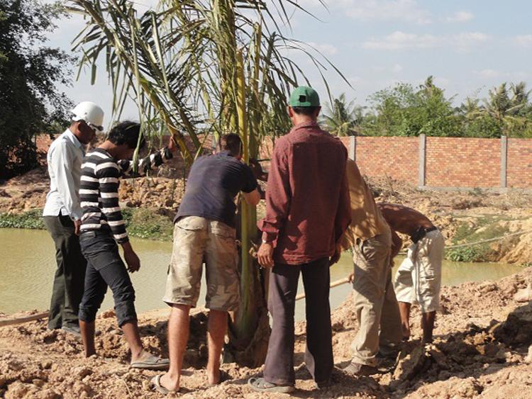 Eine kleine Palme wird gepflanzt