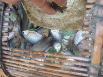 Johannes: gefangene Fische
