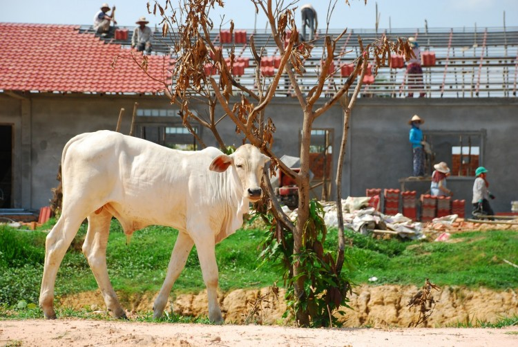Eine Kuh auf unserem Grundstück