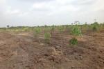 Unser Feld mit den Bäumen