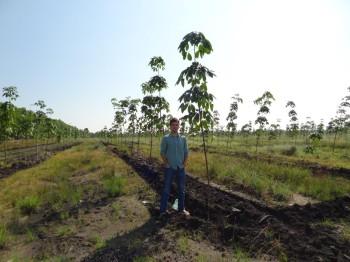 Dominik bei den Gummibäumen